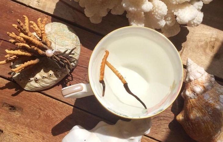 Thưởng thức trà trùng thảo mỗi ngày giúp cải thiện sức khỏe, tăng cường sức đề kháng