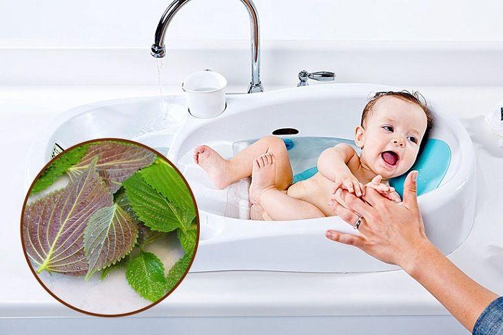 Đắp lá tía tô giúp giảm viêm, điều trị mẩn đỏ trên da