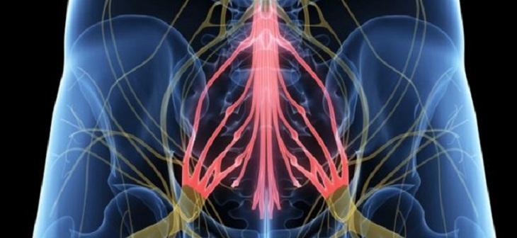 Hội chứng chùm đuôi ngựa có thể làm rối loạn chức năng bàng quang và gây bại liệt vĩnh viễn
