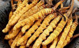 Mách bạn cách ăn đông trùng hạ thảo mang lại hiệu quả tốt nhất