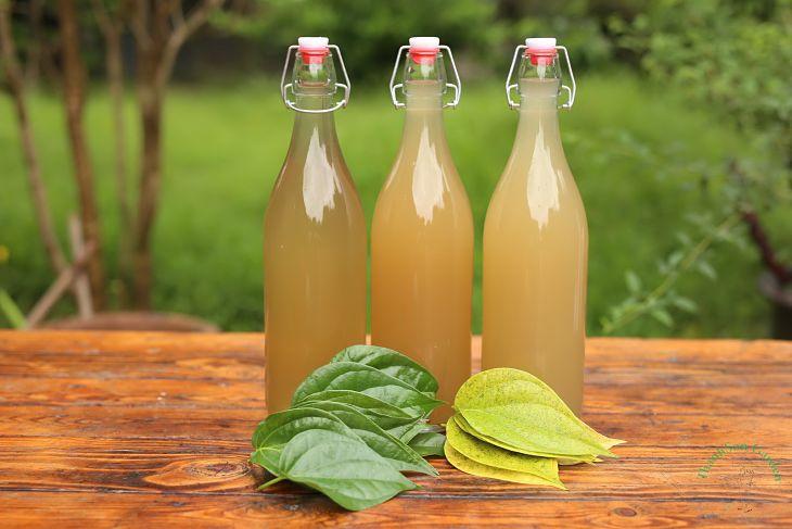 Bạn có thể uống nước lá trầu không để chữa bệnh á sừng