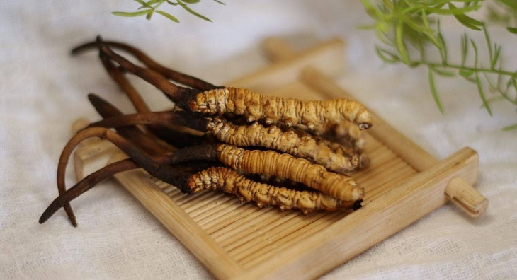 Hàm lượng dược chất trong đông trùng hạ thảo nguyên con dồi dào và rất tốt cho sức khỏe