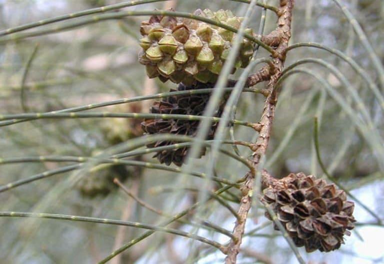 Bạn có thể kết hợp dầu dừa với nhiều nguyên liệu khác để chữa bệnh á sừng