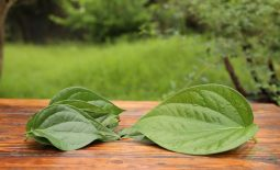 Các dưỡng chất trong lá trầu không đều rất tốt cho làn da