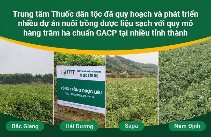 Vườn dược liệu của TT Thuốc dân tộc