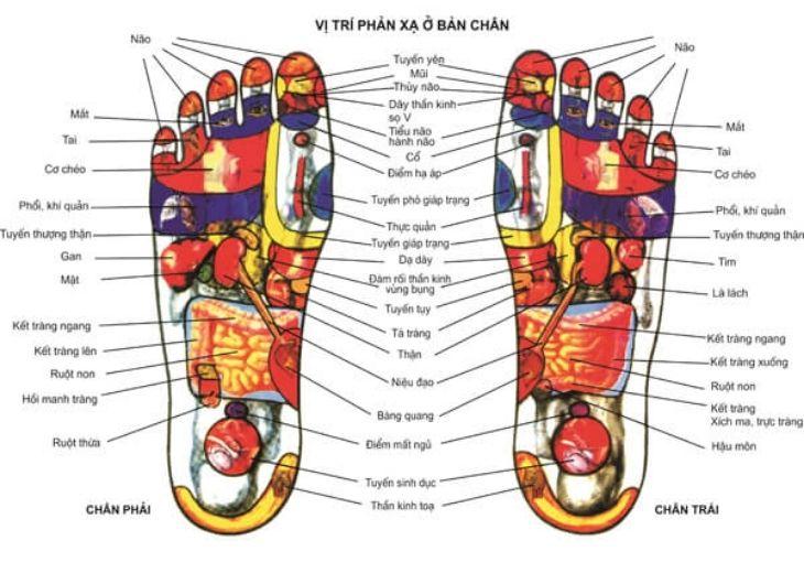 Cách bấm huyệt chữa tê chân