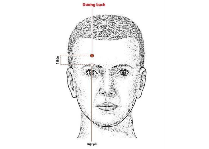 Huyệt dương bạch (Yángbái) là huyệt thứ 14 trong hệ thống đường kinh Đởm