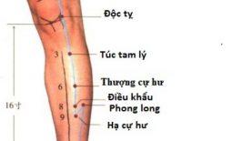 Huyệt Túc Tam Lý: Huyệt vị kéo dài tuổi xuân và chữa bách bệnh