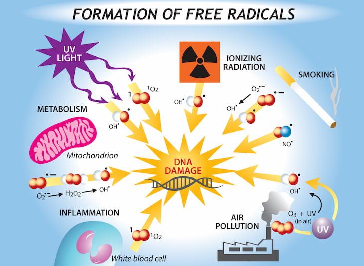 Các gốc tự do phá hủy cấu trúc da