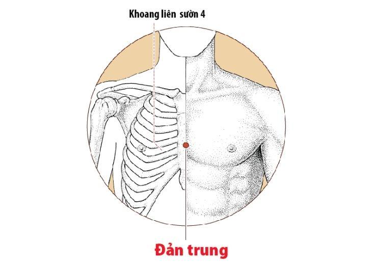 Huyệt đản trung là một trong hệ thống 108 huyệt đạo trên cơ thể