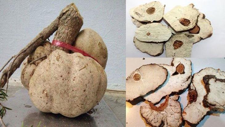 Bạch linh có hình dáng gần giống với củ đậu