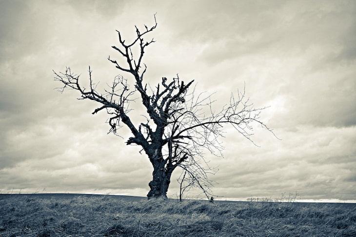 Mùa đông lạnh khô làm da dễ bị mất nước