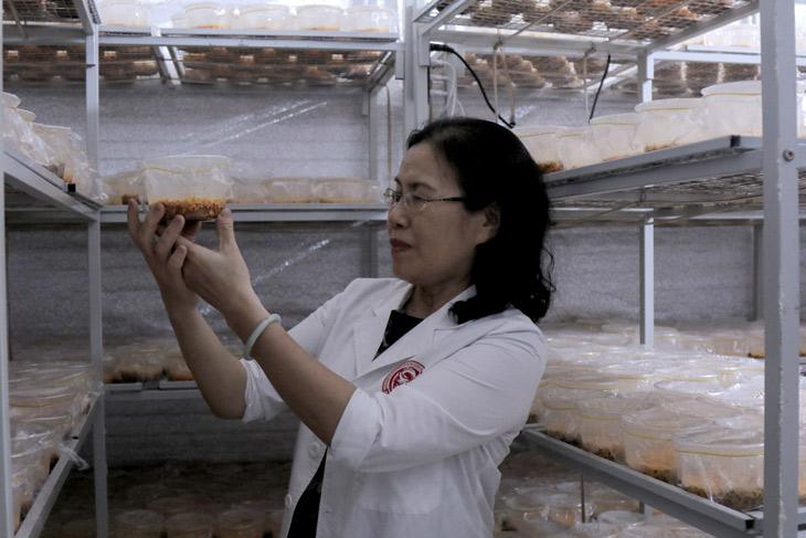 Nuôi cấy đông trùng hạ thảo trên nhộng tằm được kiểm định chất lượng chặt chẽ bởi hội đồng chuyên môn cấp cao Vietfarm