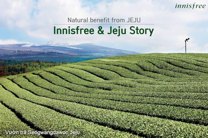 Trà xanh đảo Jeju - Nguồn nguyên liệu nổi bật của Innisfree