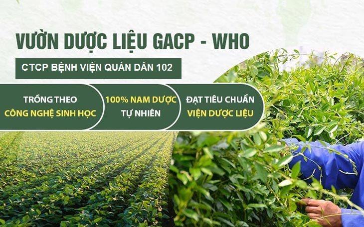 Bệnh viện Quân dân 102 sử dụng 100% dược liệu tự nhiên SẠCH, CHUẨN GACP - WHO