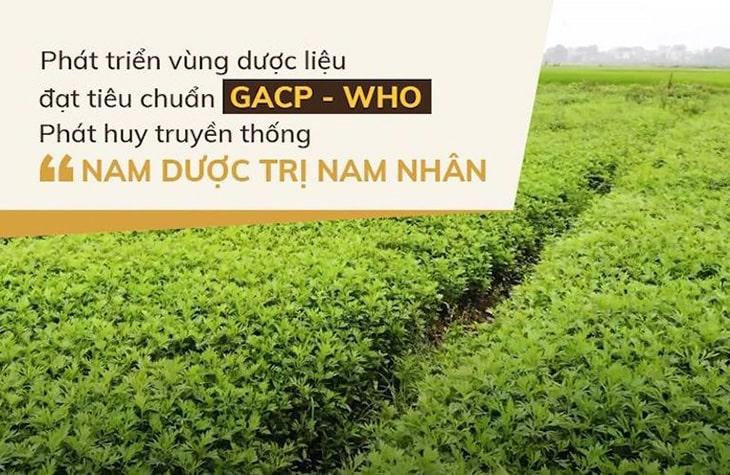 Thành phần thuốc được lấy từ các vườn dược liệu chuẩn sạch của Đỗ Minh Đường