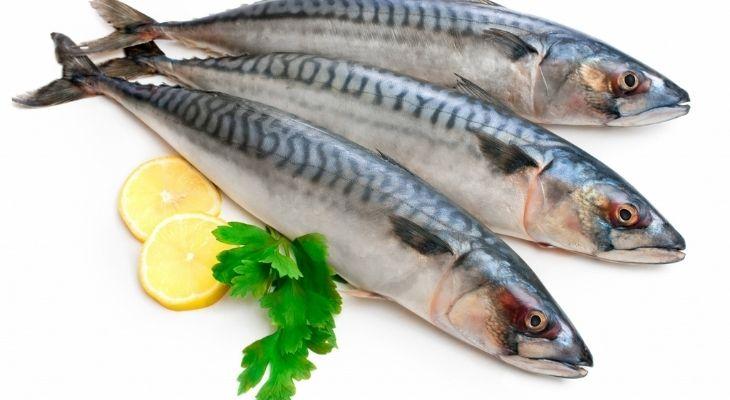 Cá biển có chứa lượng đạm và purin lớn