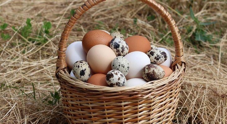 Các dinh dưỡng nổi bật nhất có trong trứng