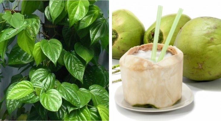 Cách chữa bệnh gút bằng quả dừa