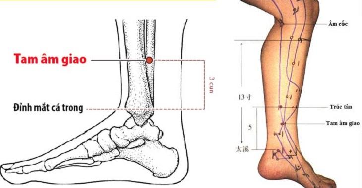 Vị trí của huyệt tam âm giao trong cơ thể con người