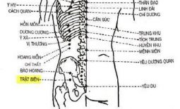 Huyệt chủ trị các bệnh lý về đau nhức thần kinh tọa, bệnh ở cơ quan sinh dục