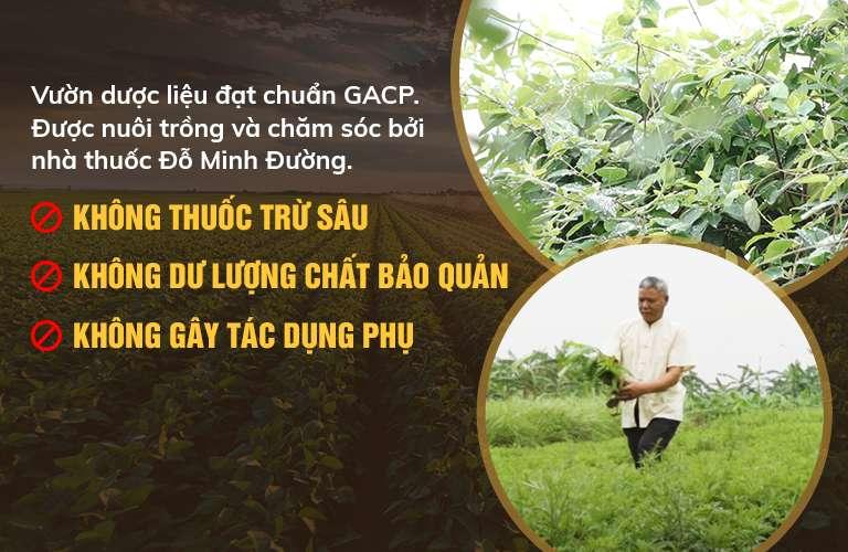 100% thảo dược từ tự nhiên, được thu hái từ vườn dược liệu của Đỗ Minh Đường