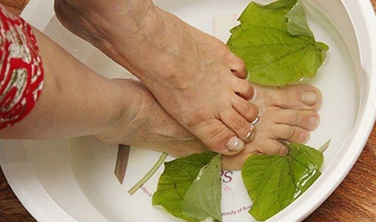 Cách ngâm chân trị Gout bằng lá lốt