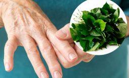 chữa gout bằng lá lốt