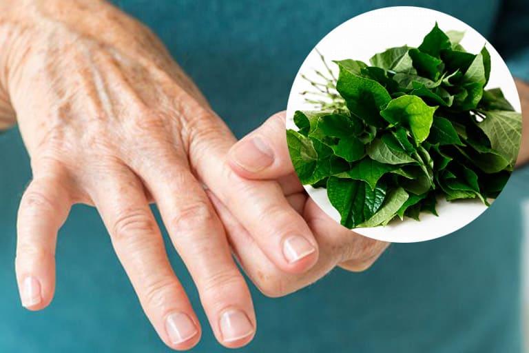 Cần lưu ý gì khi dùng lá lốt trừ khử Gout