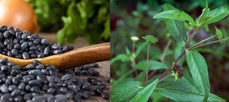 Kết hợp đậu đen và cây cỏ mực chữa suy thận