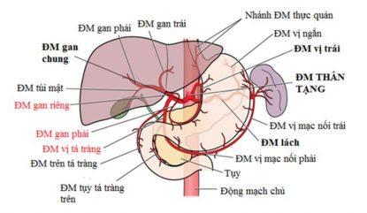 Hội chứng gan thận (HRS) và hướng xử trí hiệu quả nhất