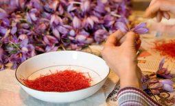 Mách bạn cách phân biệt saffron giả và thật - Địa chỉ mua nhụy hoa nghệ tây uy tín