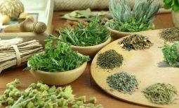 Thuốc chữa gout Malaysia có chứa thành phần thảo dược quý