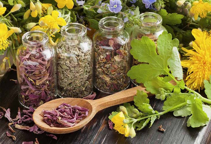 Thảo dược được dùng để làm đẹp và chữa bệnh