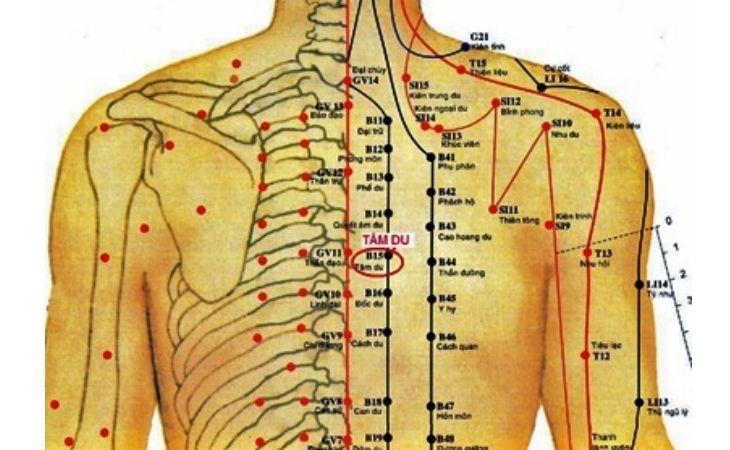 Huyệt Tâm Du trên cơ thể con người
