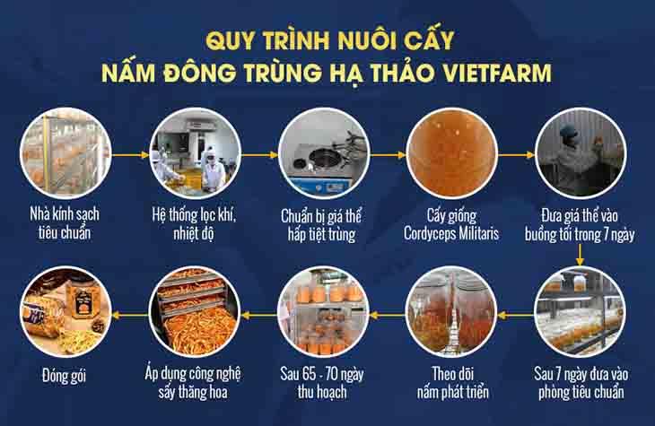 Quy trình nuôi cấy Đông trùng hạ thảo Vietfarm